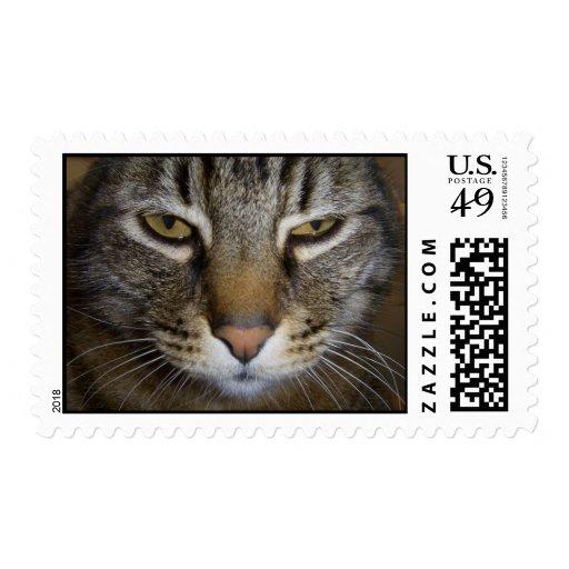 Tabby Cat Post Stamp