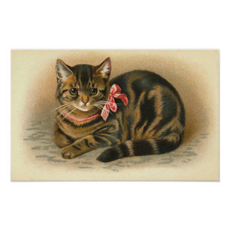 """Tabby Cat"" Poster"