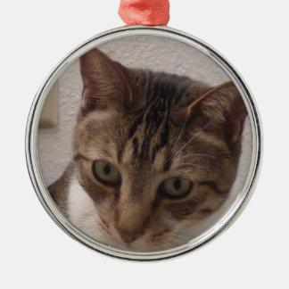 Tabby Cat Premium Round Ornament