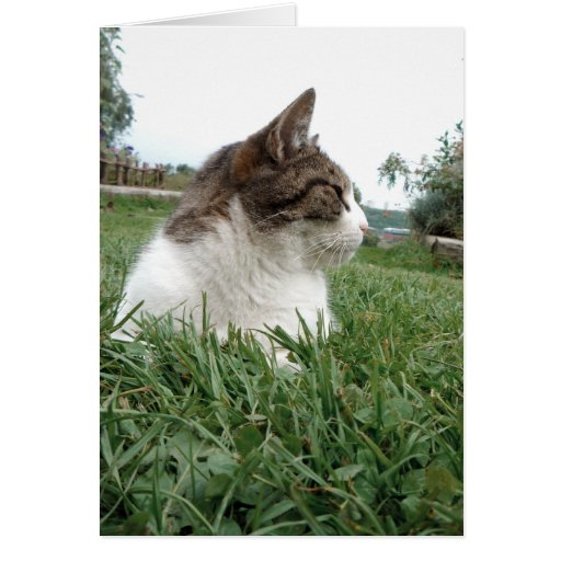 Tabby Cat Relaxing in Grass Personalizable Greeting Card