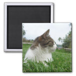 Tabby Cat Relaxing in the Grass Magnets