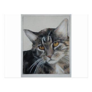 Tabby Cat - samantha Post Card