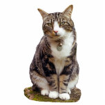 """Tabby Cat Sculpture<br><div class=""""desc"""">Cute tabby cat sculpture to sit on your desk and remind you of your favorite pet.</div>"""