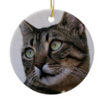 Tabby Cat Sitting In The Shade Behind Passiflora V Christmas Tree Ornament