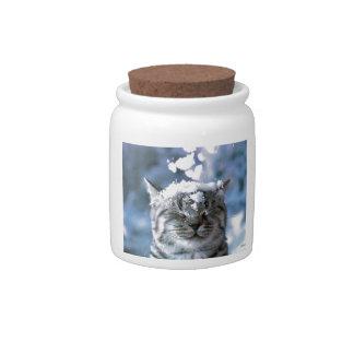 Tabby Cat  Snow Splash Candy Jar