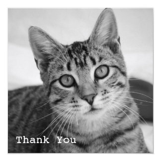 Tabby Cat Square Flat Thank You Cards