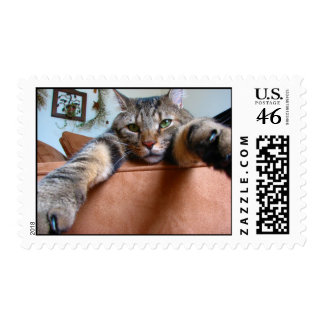 Tabby cat stamps