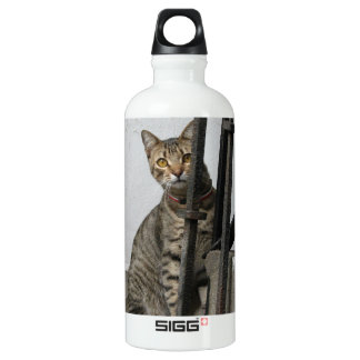 Tabby Cat Water Bottle