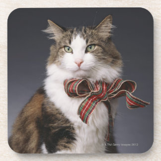 Tabby cat wearing plaid bow beverage coaster