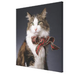 Tabby cat wearing plaid bow gallery wrap canvas