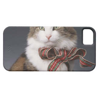 Tabby cat wearing plaid bow iPhone SE/5/5s case