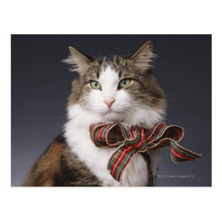 Tabby cat wearing plaid bow postcard