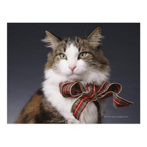 Tabby cat wearing plaid bow postcard