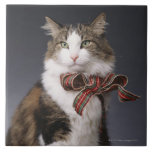 Tabby cat wearing plaid bow tile
