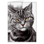 Tabby Cat With Attitude Card