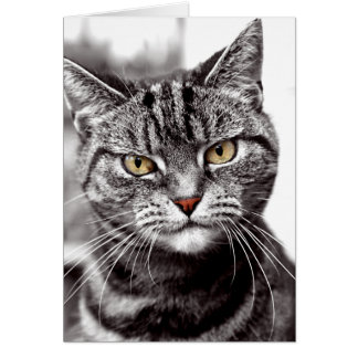 Tabby Cat With Attitude Card