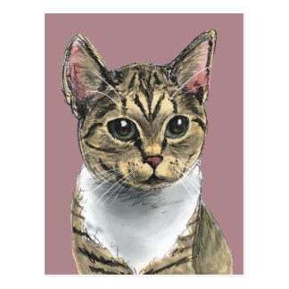 Tabby Cat With Big Eyes Drawing Postcard