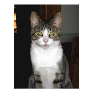 Tabby cat with big green eyes letterhead