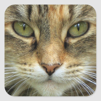 Tabby Cat with Green Eyes Portrait Sticker