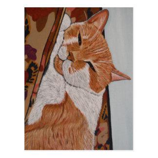Tabby Catnap Postcard