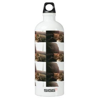 Tabby Cats Aluminum Water Bottle