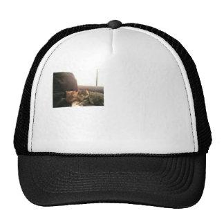 Tabby Cats Hat