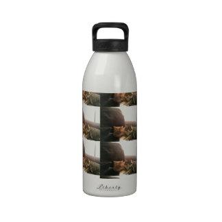 Tabby Cats Reusable Water Bottle