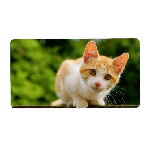 Tabby de oro y gatito blanco etiquetas de envío