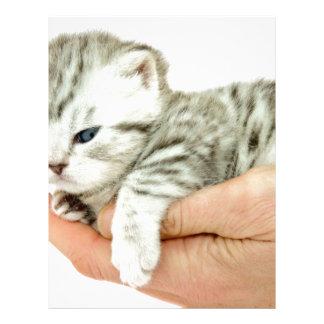Tabby de plata del gatito que miente en la mano membretes personalizados