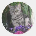 Tabby de plata - pegatina del gato