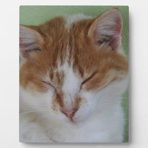 Tabby del jengibre que tiene una siesta del gato placa para mostrar