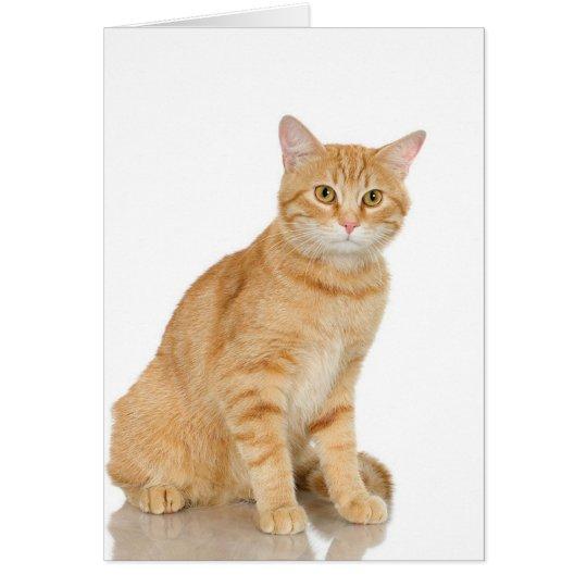Tabby del jengibre tarjeta de felicitación