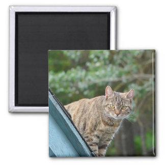 Tabby en el tejado imán cuadrado