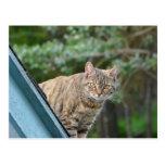 Tabby en el tejado postal