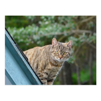 Tabby en el tejado postales