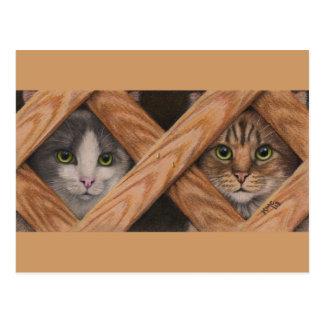 Tabby gris de los gatos detrás de la postal de la