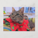 Tabby Holiday Postcard