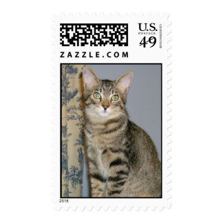 Tabby in toile postage