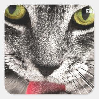 Tabby Katz Square Sticker