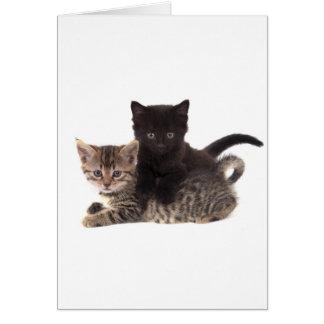 tabby kitten black kitten card