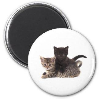 tabby kitten black kitten fridge magnets