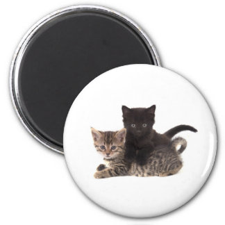 tabby kitten black kitten aimant pour réfrigérateur