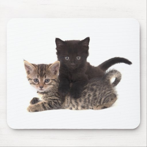 tabby kitten black kitten mouse pad