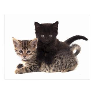 tabby kitten black kitten tarjeta postal