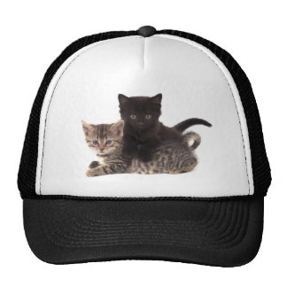 tabby kitten black kitten trucker hat