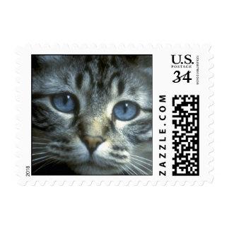 Tabby Kitten Face Postage Stamp
