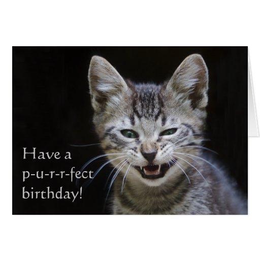 Tabby Kitten Happy Birthday Greeting Cards