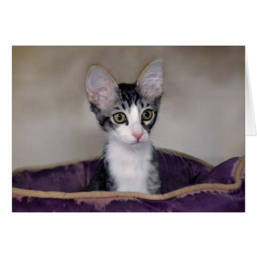 Tabby Kitten in a Purple Bed