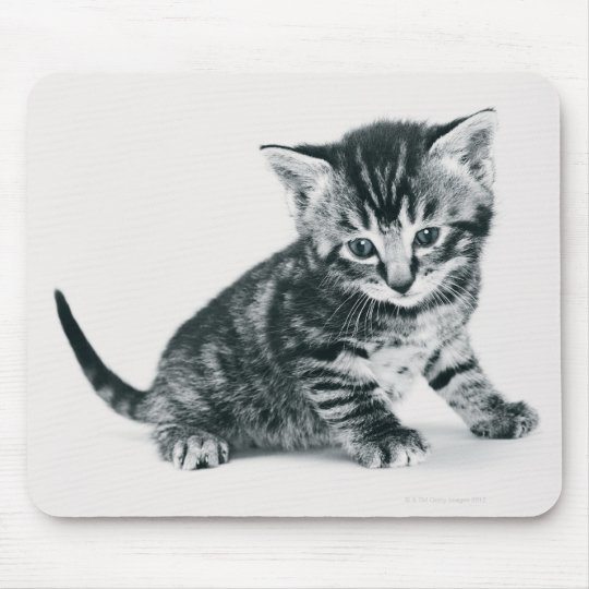 Tabby Kitten Mouse Pad