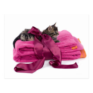 Tabby Kitten one pink towels Postcard